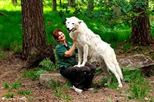 Wolf von der alten Fasanerie in Hanau