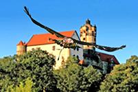 Vogel der Falknerei Ronneburg