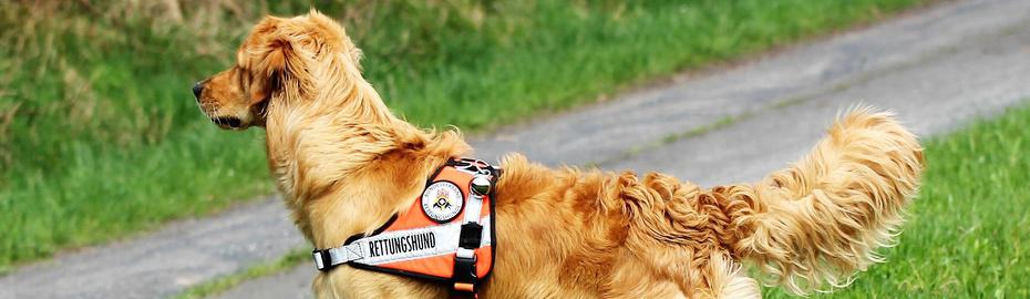 Rettungshundestaffel Main-Kinzig