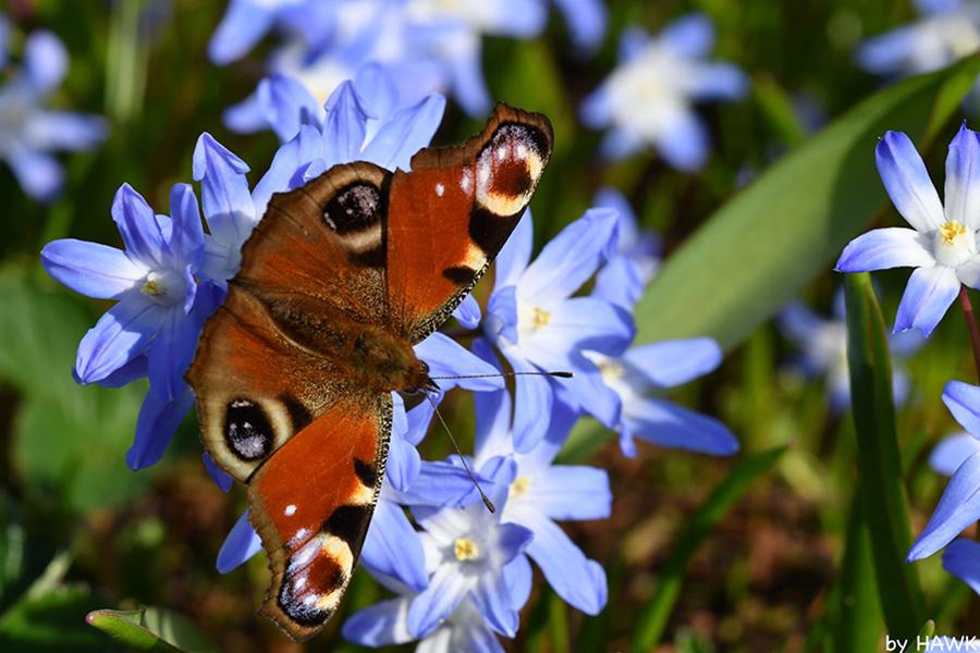 """Makroaufnahme """"Schmetterling"""" von Mark Normann Reichle"""